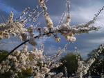 Люблю грозу в начале мая)