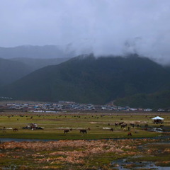 Предгорье Тибета