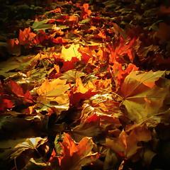 Осень пришла..шепнул мне..ветер