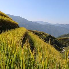 Рисовые поля Гуйлиня