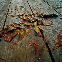 Падают..падают листья..