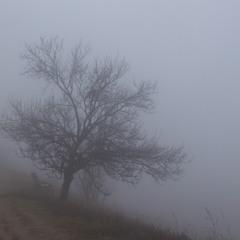Туман поссорился с дождем..