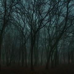 Сумерки..туман..зима.