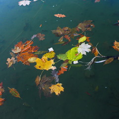 Улетели листья с тополей...