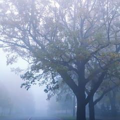 Предрассветный туман..Одесса