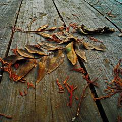 Падают..падают..листья..