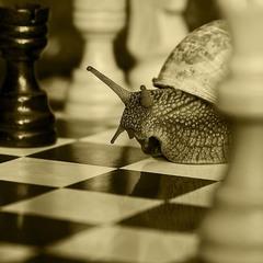 Про шахматы