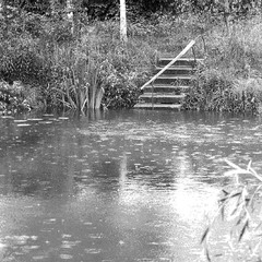 С ветки на ветку тихо сбегают капли... Дождик весенний.