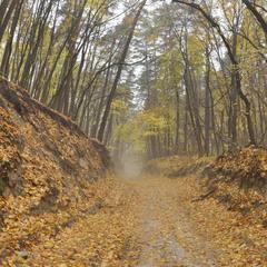 Гомольшанский лес