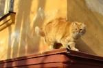 Солнечный кот