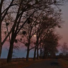 Из века в век на небосклоне  блестит знакомый лунный лик.