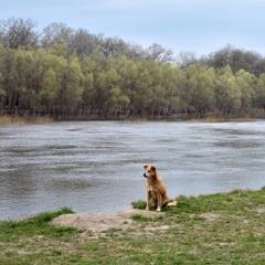 Пейзаж с собакой