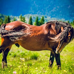 Horse in Carpathian mountains