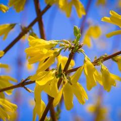 Жовто-блакитний етюд