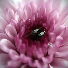Утренний цветок