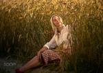 В пшеничних полях