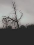 Disintegrating Time