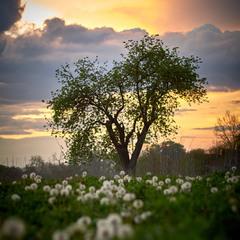 Вечір Весни