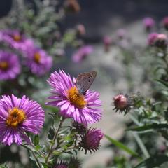 Цветок на цветке