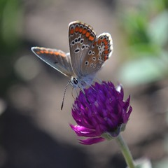 Средь зноя бабочка, цветок