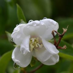 Невеста под дождём