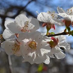 Нежность весны