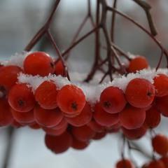 Под белым-белым покрывалом декабря
