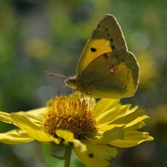 Жёлто-зеленый этюд