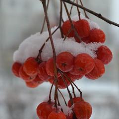 Сага о снежинке