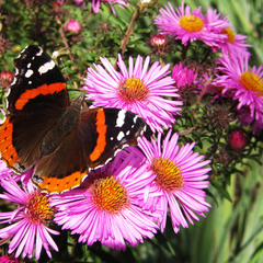 А бабочка крылышками...