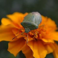 Рыцарь круглого цветка