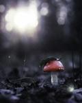 Дождь грибной
