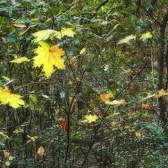 В осінньому лісі тиша..