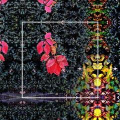 Повсякденний осінній калейдоскоп