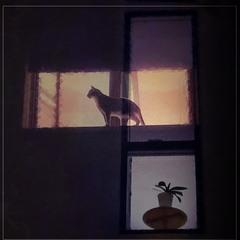 Вікна..