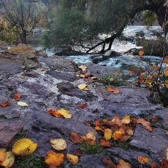 """Нас  кликала  до  себе  осінь, трусила  листя.."""
