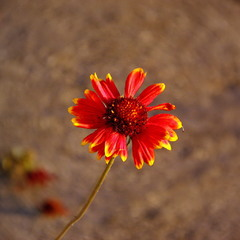 Зацікавлена квітка
