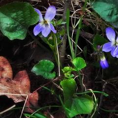 Весняне мікрожиття