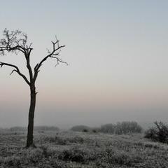 Моє улюблене дерево сьогодні перед світанком