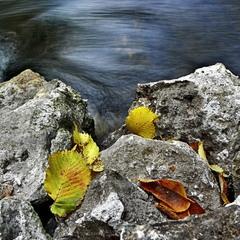 Співають листочки з бистрою водою..