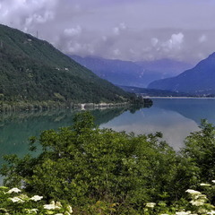 Панує терпкий аромат бузини над озером ...