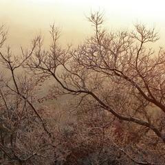 Рожева мить світанку