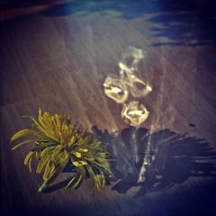 Кульбабка і  рефлекси