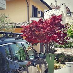 Mogliano -  Street