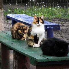 Українські коти - нема, що робити.. Дрімають..