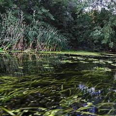 Таємнича ріка