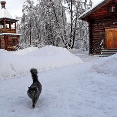 Містична кішка..