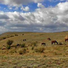 Коні під хмарами
