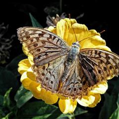 Всі метелики гарні? :)