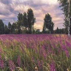 Придорожная трава в дождливый летний вечер..